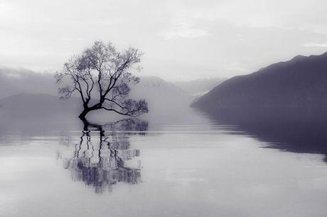 Tree IMG_3131