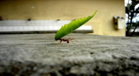 ant-carrying-leaf