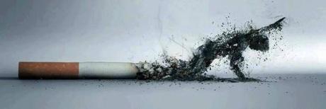 tabaco IMG_5350